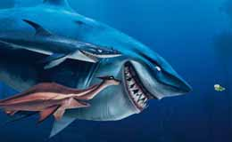 Le monde de nemo 3d premier extrait 39 les poissons sont - Requin enclume ...