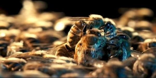 Des abeilles AL 2 Une