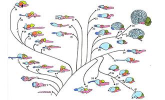 Arbres phylogénétiques